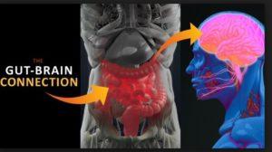 腸と脳(「Thinkstock」より)
