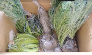 届けられた野菜