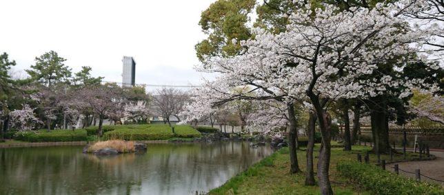 名古屋市の豊国神社の桜①