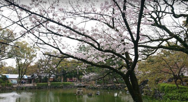 名古屋市の豊国神社の桜②