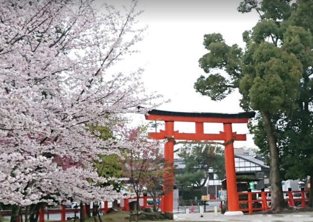 京都 上賀茂神社の桜