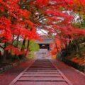 GoTo日本!京都のお寺を楽しもう!~宗派と歴史を見よう~